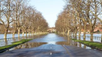 A flooded road lined with plane trees on either side