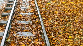 Railway tracks covered with autumn leaves