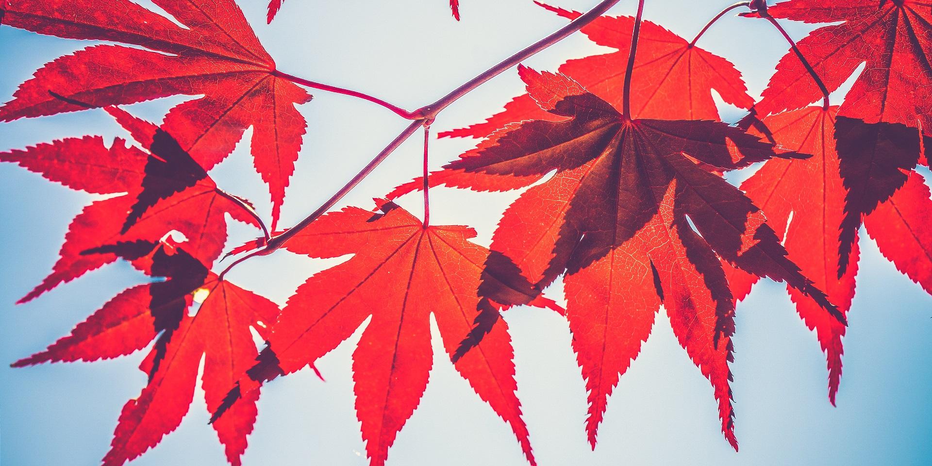 Official Start Of Fall 2020.When Does Autumn Start Met Office