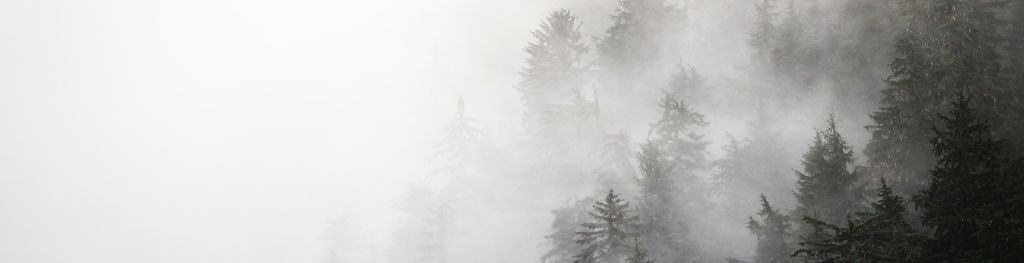 8 facts about fog - Met Office