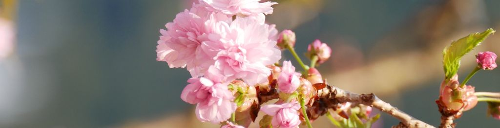 10 facts about spring - Met Office