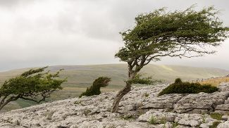 Windswept trees on a rocky hill under a grey sky