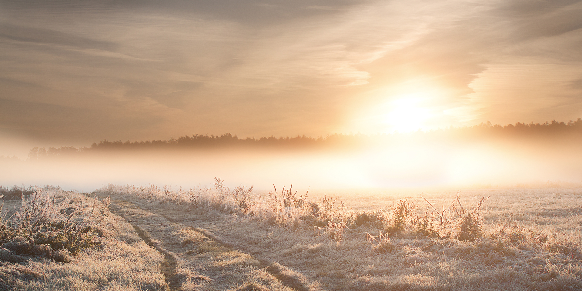 frost-covering-a-sunny-field.jpg