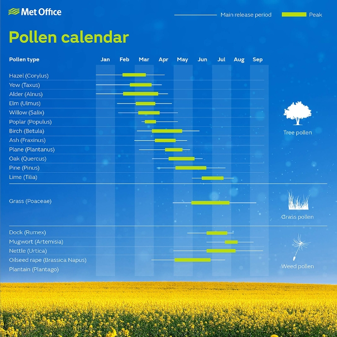 Pollen research to offer hope to hay fever sufferers - Met