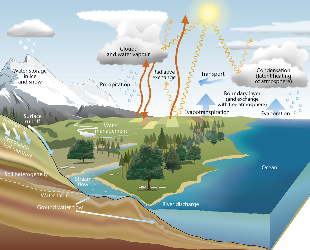 global water cycle diagram figure illustration rain drop water cycle diagram #8
